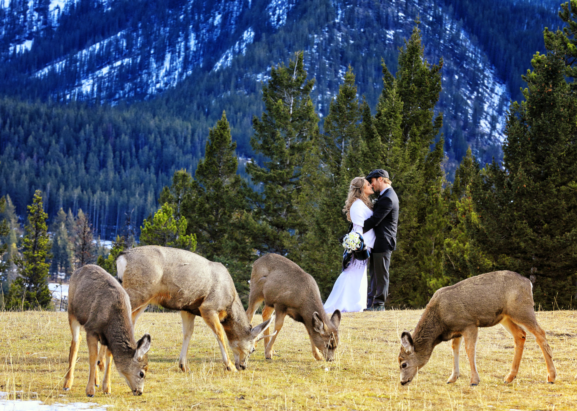 Wild wedding in the Banff National Park., Banff photographers, Burnett Photography