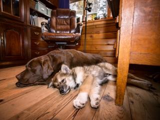 My dogs, Strider and Hera